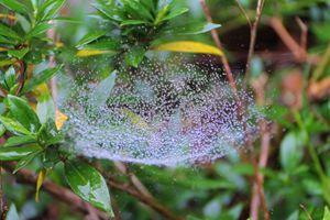 Good Morning Web 1