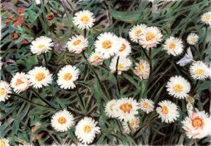 Flowers - Volkov Art