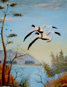 Common Sheld Ducks