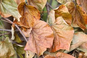 Naturally Faded Leaves
