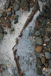 winter driftwood