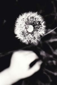 Dream of a Wish - olivetree
