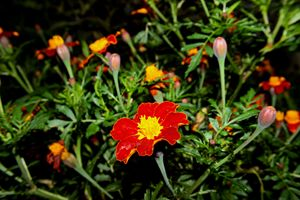 Garden Focus