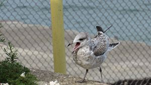 Rather irritated bird