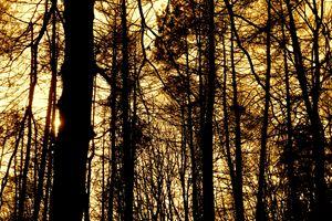 Ukrainian Forest at Sunset