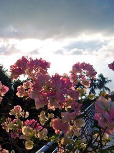 Malaysian Coastal Bloom