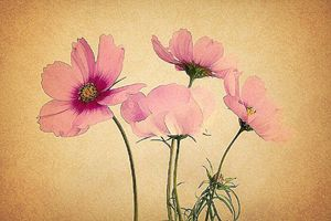 pink flower painting wallpaper