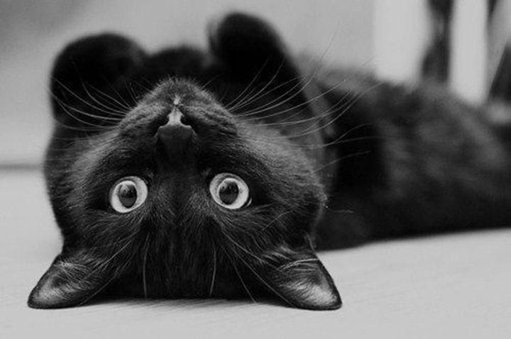 Black Cat landing on floor - Ariana2u