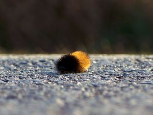 Little Mr. Caterpillar