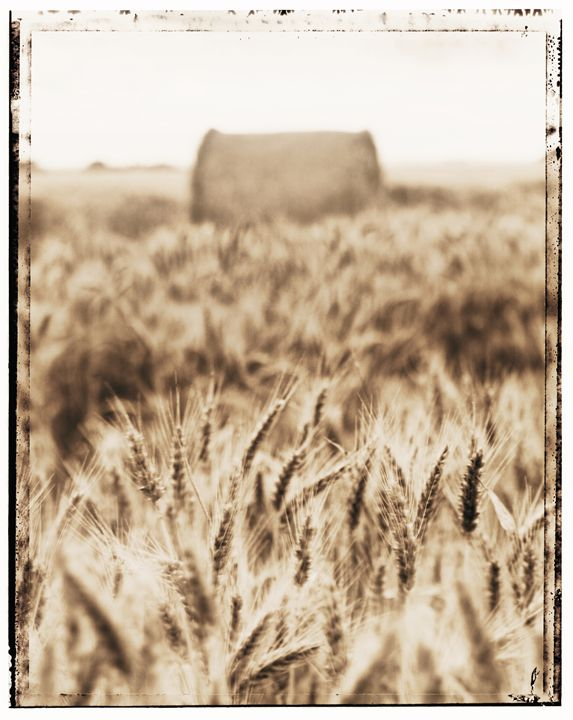Harvest time - Gem Photography