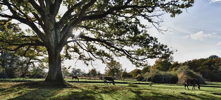 New Forest Horses - Gem Photography