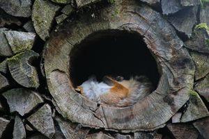 Fox in the Hole - M.G. Schmid