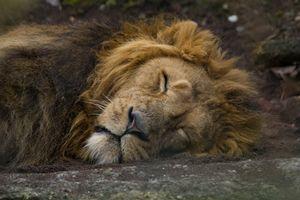 Sleeping King