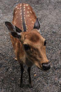 Curious Deer - M.G. Schmid