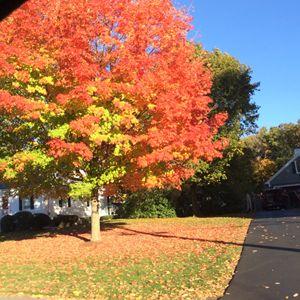 Fall in Boston