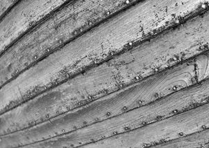 wooden boat close up