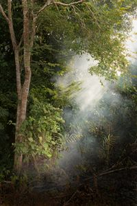 A shaft of light in the jungle
