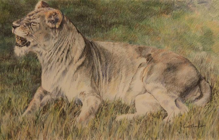 The Lioness - keiththompsonart