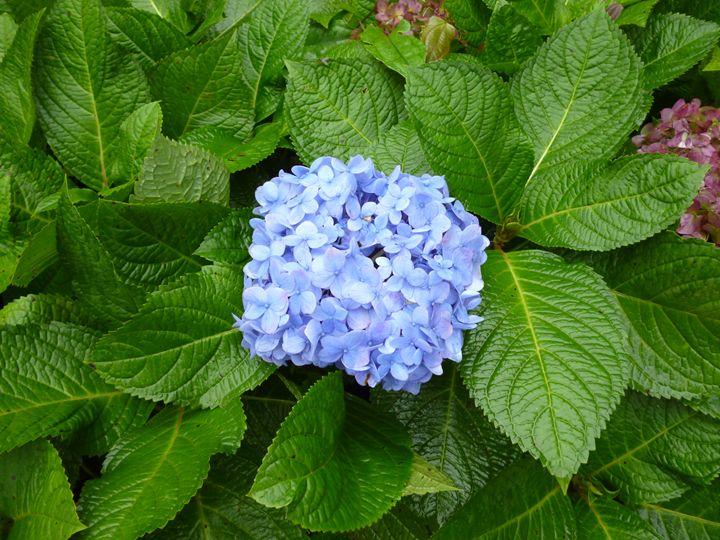 Flower - Chand Ran