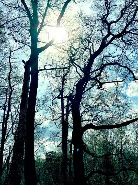 20160324-03 Trees - Diane Ong