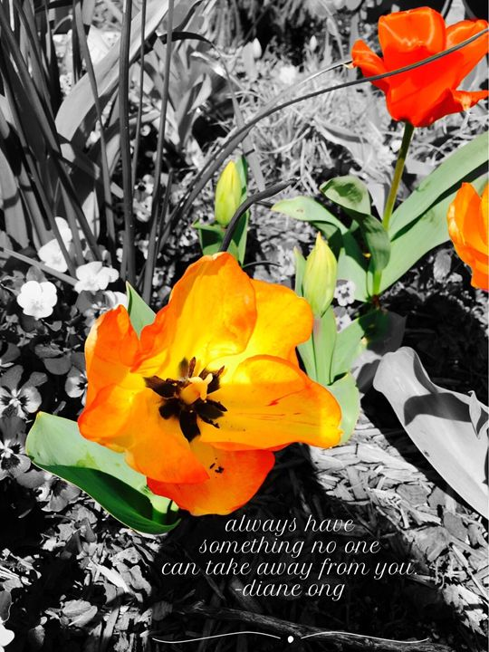 20160313-74 Blossoms - Diane Ong