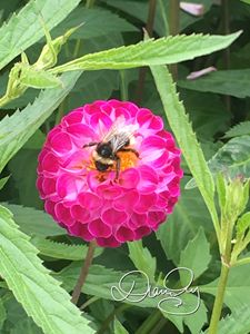 Flower Bee 1