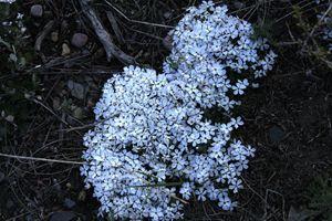 Animal Wildflowers