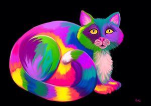 Rainbow Calico