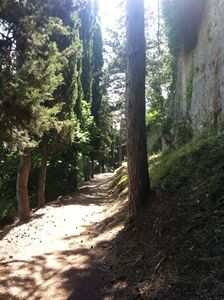 Pathway in Tuscany