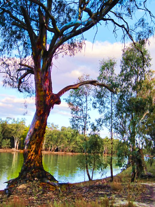 Murray River Tree - Akimi Art