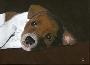 Jack Pup