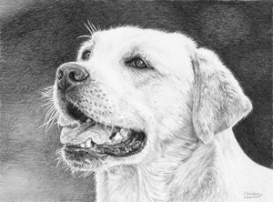 Mans Best Friend - Frances Vincent Arts