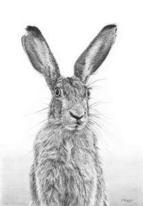 I'm Over Hare - Frances Vincent Arts