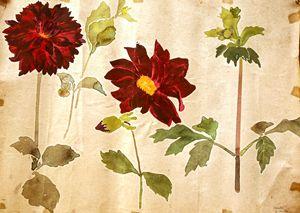 The Carnation flowers - Gagan's Art