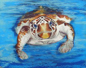 Save the Sea Turtle