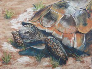 Old Man Gopher Turtle