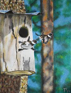 South Carolina Wood Ducklings