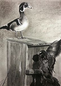South Carolina Wood Ducks