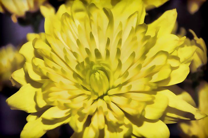 Yellow Peddles - Frozen Face
