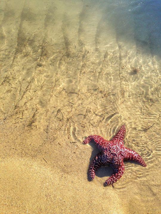 By the Sea - Joshua Levi Anderson