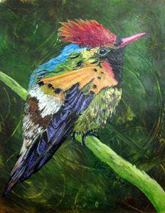 Tufted Coquette Hummingbird