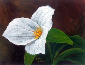 Grand Trillium - Tami Booher Appalachian Nature Painter
