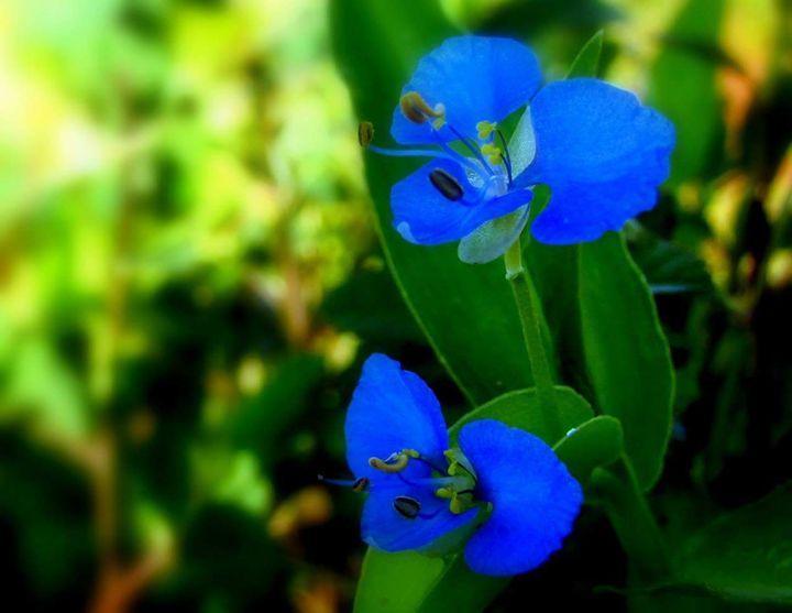 sisters - Flower
