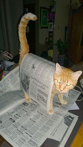 Kitty Daily