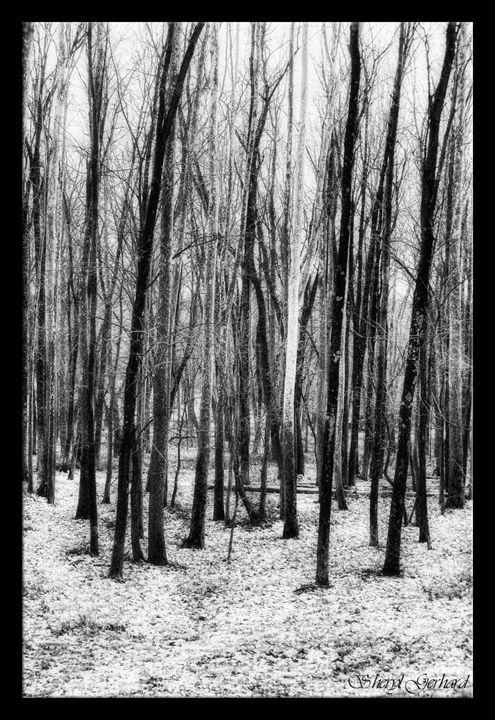 Winter White - Sheryl Gerhard
