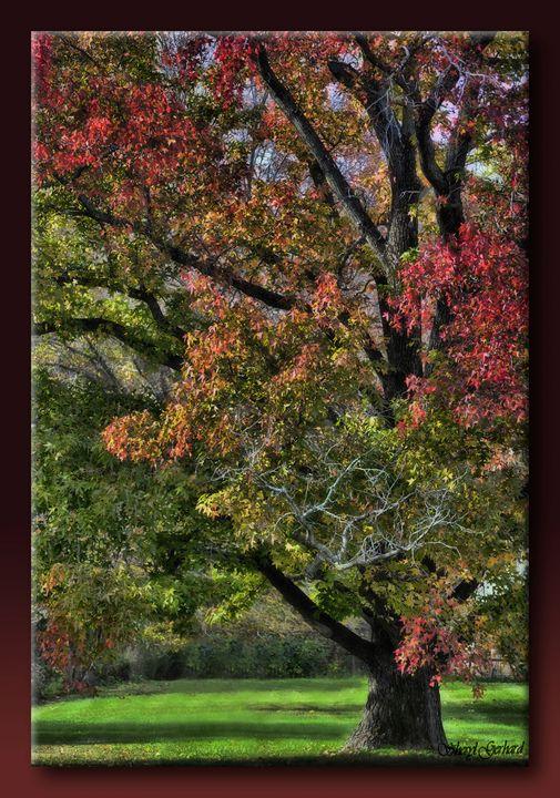 Fall's Final Display - Sheryl Gerhard