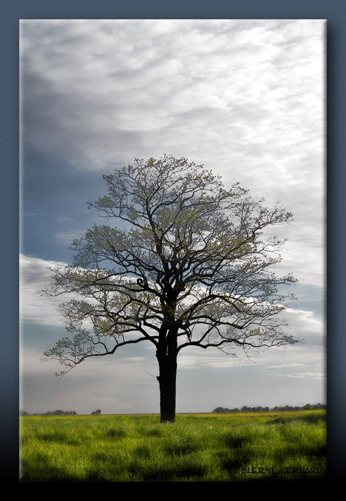 The Tree - Sheryl Gerhard