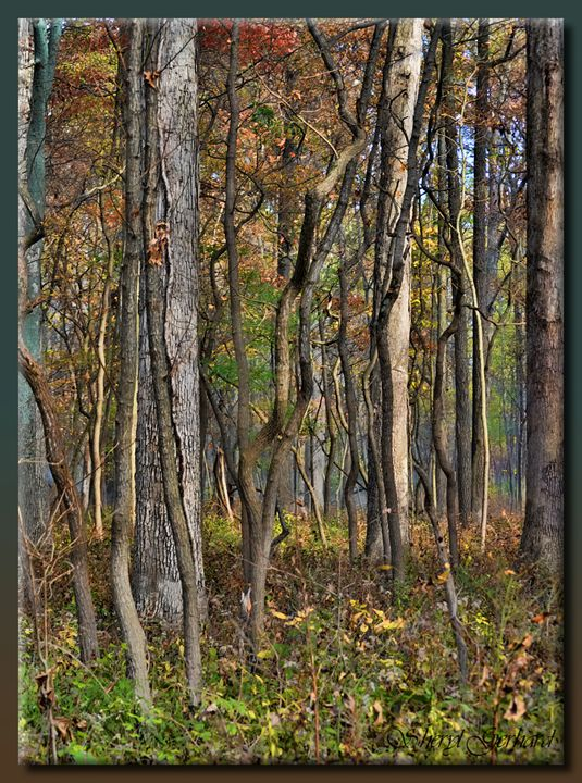 The Wood - Sheryl Gerhard