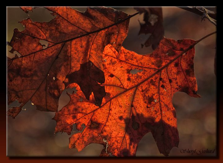 Autumn Pair - Sheryl Gerhard