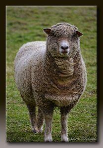 Are Ewe Talking to Me?